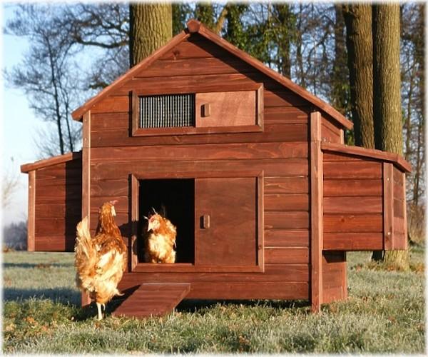 Hønsehus friland